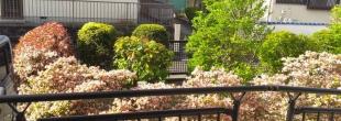 我が家の庭風景